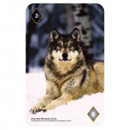IF by Mufubu National Geographic 52 Picture Playing Cards Amazing Animals
