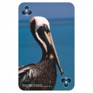 IF by Mufubu National Geographic 52 Picture Playing Cards Brilliant Birds